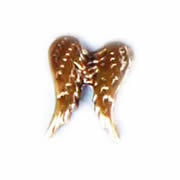 Faith Charm for Floating Memory Locket - Double Angel Wing Gold Tone
